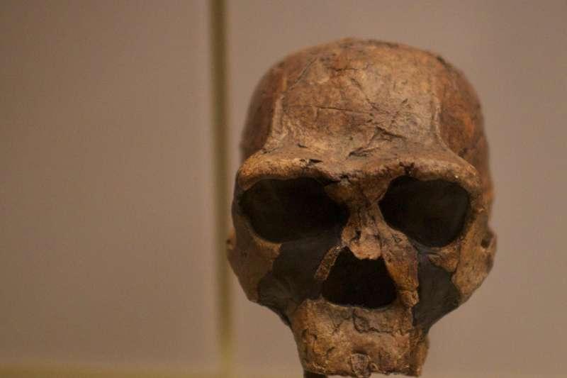 最新考古研究認為,爪哇直立人的最後生存年代介於10萬8千年至11萬7千年前,總共在地球上存活了180萬年。(AP)