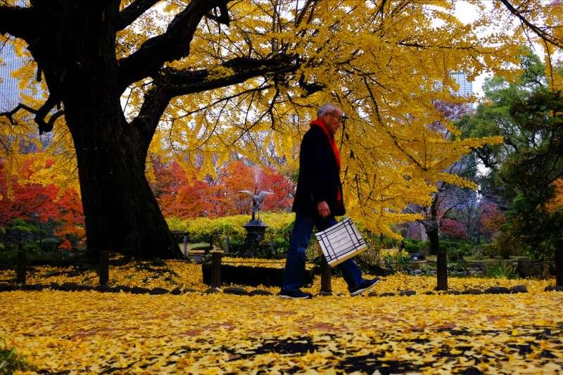 日本東京日比谷公園。(美聯社)