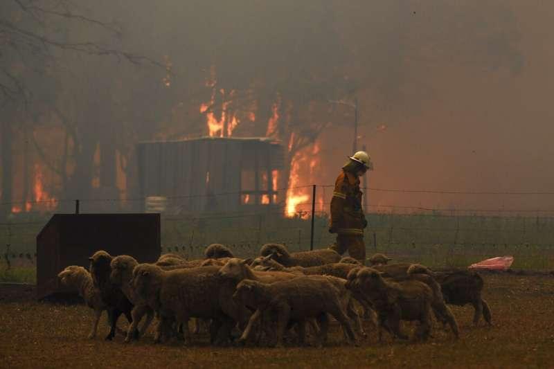 澳洲各地消防員疲於奔命,消滅野火。(AP)