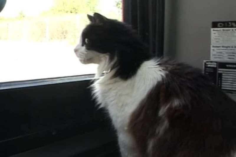 喜歡坐公車的小貓卡斯珀(Casper)(BBC)