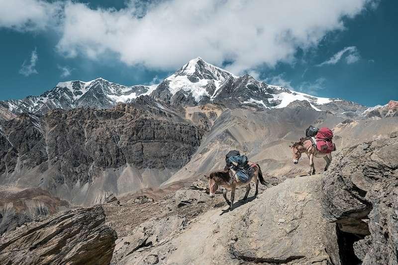 爬山騎驢好輕鬆?如果有第二隻驢...那可要小心了。(圖/unsplash)