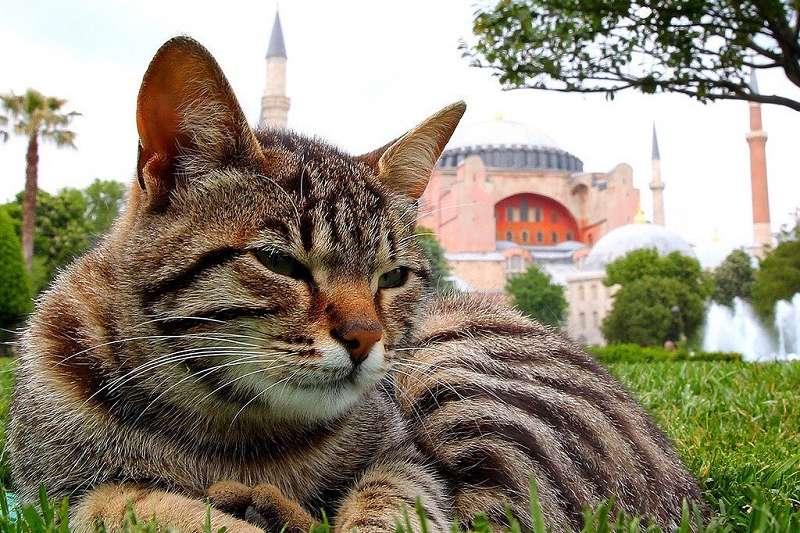 有人甚至把第一大城伊斯坦堡說成「被貓統治的城巿」,就連城巿地標聖索菲亞博物館(Hagia Sophia)內都住著一個貓家庭。(圖/officialturkishmuseums IG)