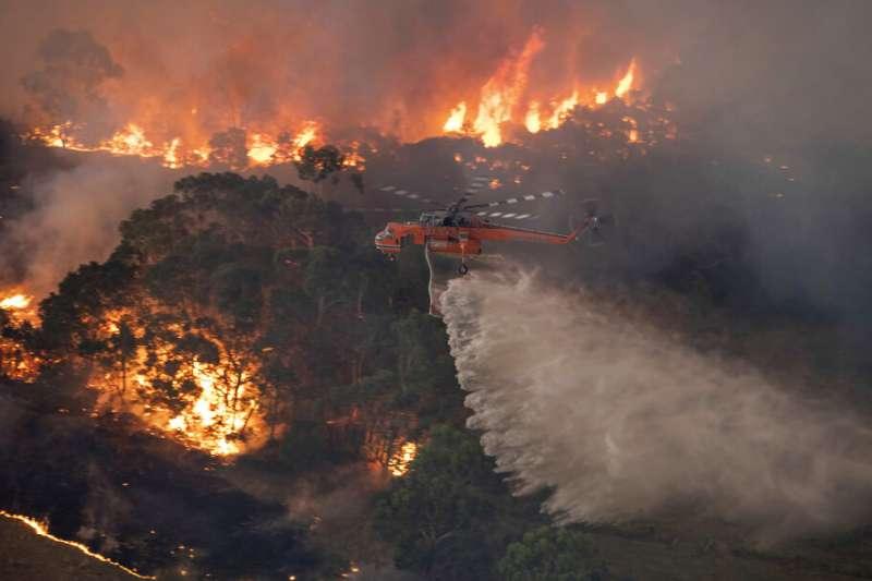 澳洲野火延燒多月,造成至少24人死亡,近5億動物喪命。(AP)