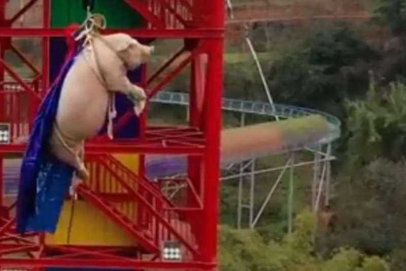 日前,一段重慶景區「豬高空彈跳」的影片在網站瘋傳,引發中國網友齊炸鍋,口誅筆伐景區虐待動物。(BBC News 中文)