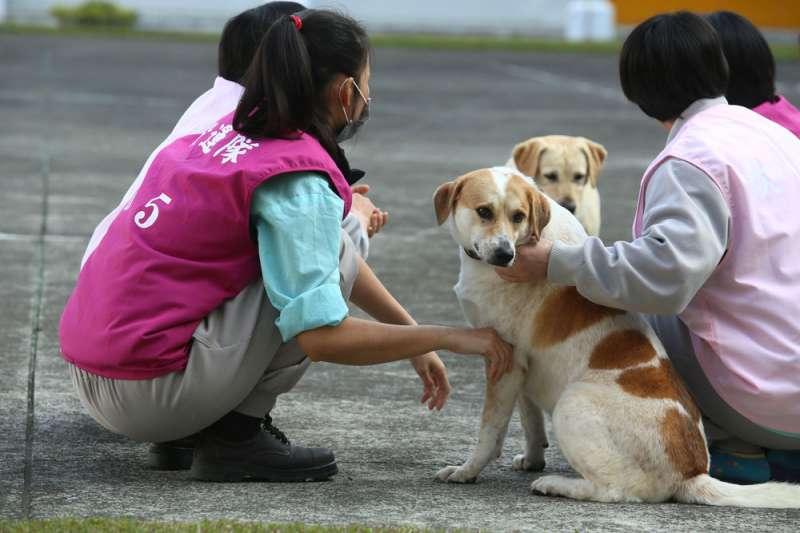 勇士(前)、麗茲(後)成為國內監所首創的療癒陪伴犬。(柯承惠攝)