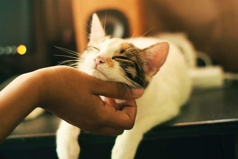 科學家想觀察當貓咪被放到一個陌生環境時,都是以什麼樣的姿態與牠的僕從交流,最終統計結果讓科學家大吃一驚。(圖/unsplash)