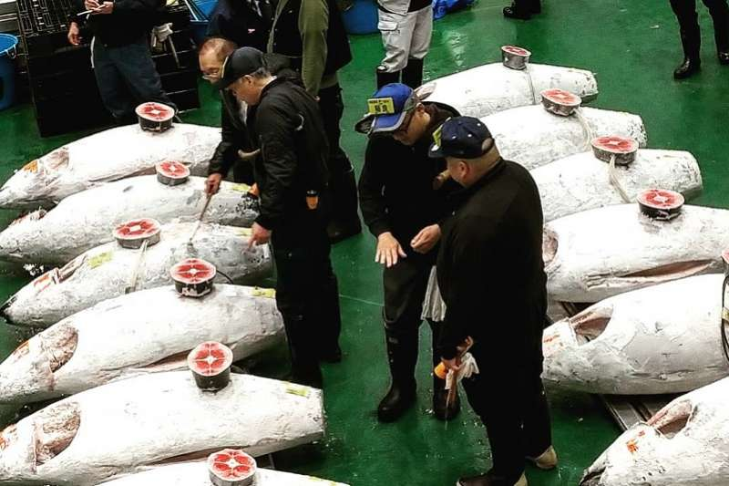 那天走進鮪魚拍賣會的會場,當下便被地面上數量浩大的黑鮪魚漁獲吸住眼球。現場一字排開且多排並陳的黑鮪魚,是台灣無從可見的規模。(圖/方格子)
