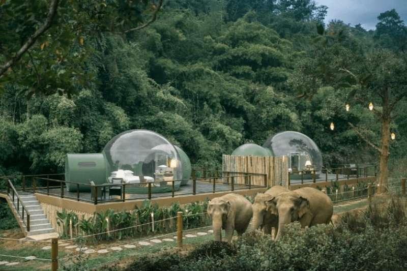 酒店與GTAEF金三角亞洲象基金會一起合作,將遭遇困難或是需要救助的大象拯救出來後安置於此,讓大象與旅人一起享受平靜的生活。(圖/瘋設計)