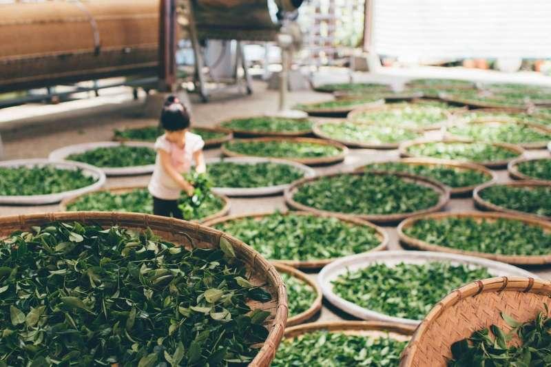 20200221-茶葉,茶,收成。示意圖。(資料照,取自pixabay)