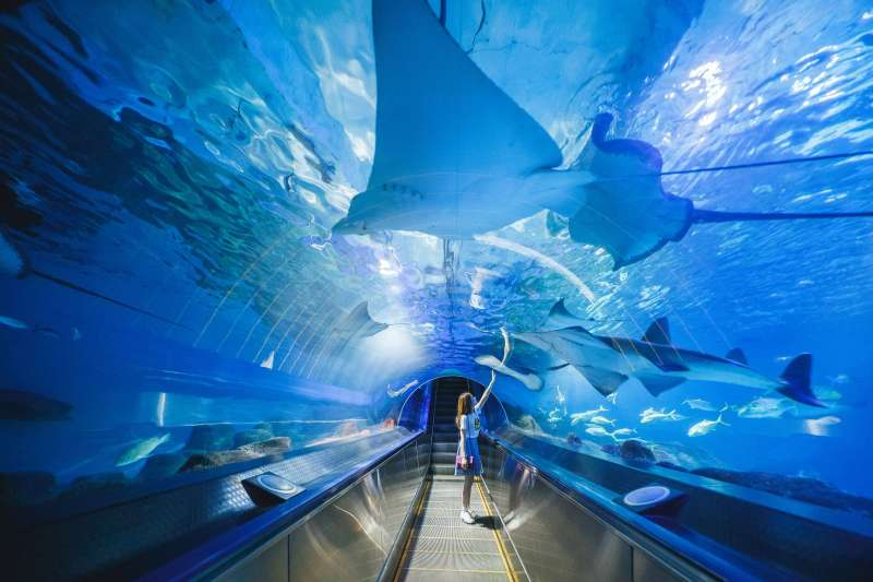 到探險島水族館「海底隧道」享受湛藍又晶瑩剔透的光景吧!(圖/遠雄海洋公園提供)