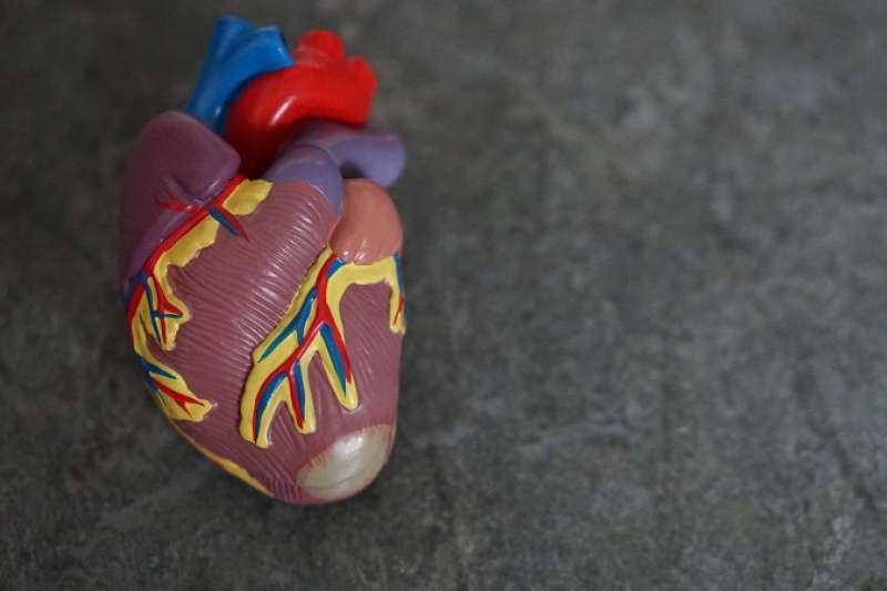 瓣膜出問題,通常不會讓患者馬上感到不適,許多瓣膜疾病是醫師聽診時意外發現心臟雜音而診斷的。(圖/unsplash)