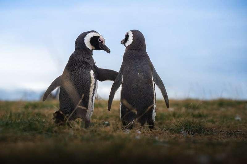 受到全球暖化影響,南極有許多地方已經露出青青草地。(圖/城市美學新態度)