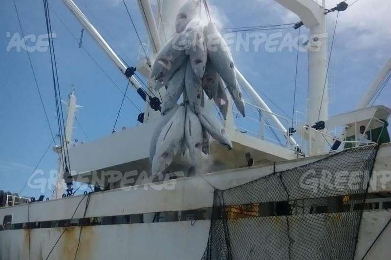 台灣鮪延繩釣漁船正把冷凍的鮪魚轉載到另一艘船上,不過根據漁工訪談指出,該船疑似涉及強迫勞動、割鰭棄身與其他非法漁船轉載之行為。(綠色和平提供)