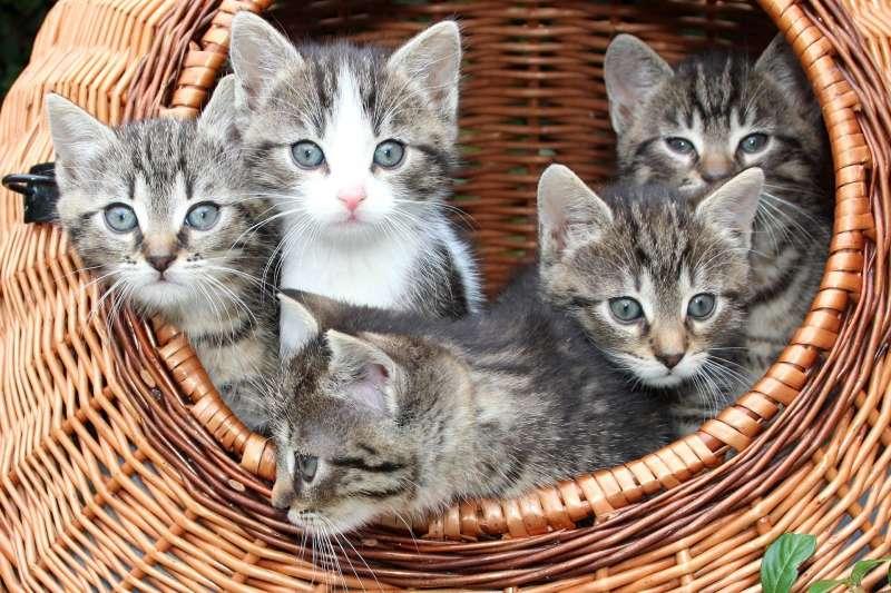 最新研究指出,貓比狗更容易感染新冠病毒(Pixabay)
