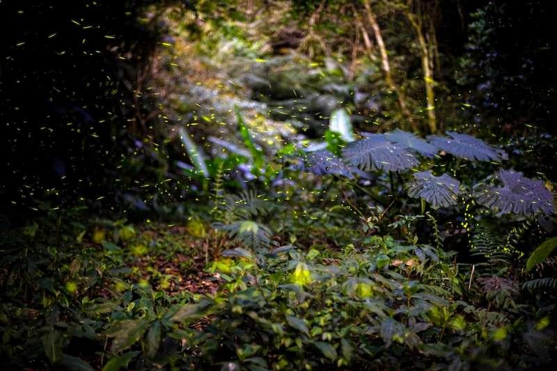 疫情肆虐,走一趟宜蘭欣賞螢火蟲最美光景,是抒壓的好選擇。(圖/宜蘭縣政府提供)