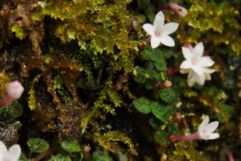 曾經在野外無比神祕的玉蘭草,如今已時常出現在植物愛好者的作品裡。©攝影:趙建棣(出版社提供)