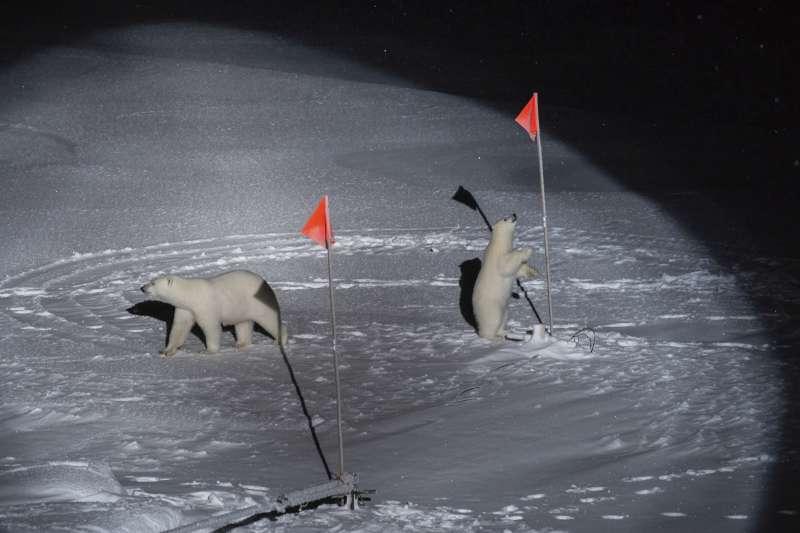 2020世界新聞攝影大賽,紐約時報記者Esther Horvath 所攝北極熊照片獲得「環境類-單幅」一等獎。(AP)