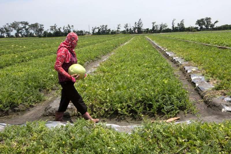 立委郭國文表示,確實現在台南的水量很吃緊,水稻停灌是不得已的決定。示意圖。(新新聞資料照)