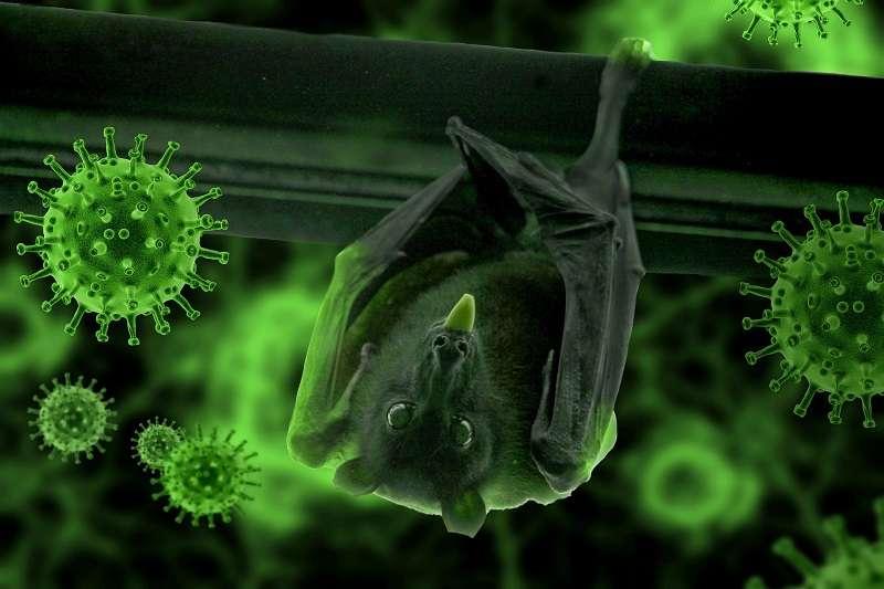 大部分,甚至所有獨特的文明傳染病,都可能是由動物傳給人類的。(圖/pixabay)