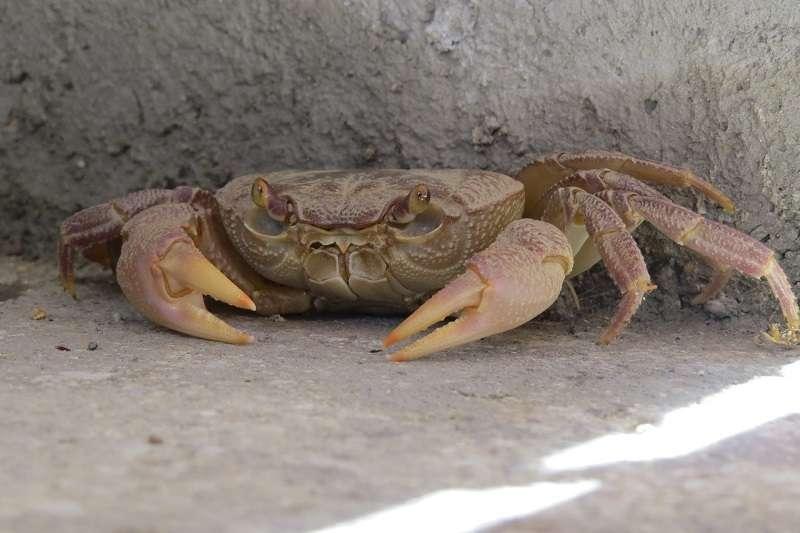 中國境內出現另一種「感染甲殼類」的神祕病毒,主要會對蝦、螃蟹等物種造成傷害,具有高度傳染性,至今仍無法保證不會突變病傳染給人類。圖為示意圖。(圖/pixabay)