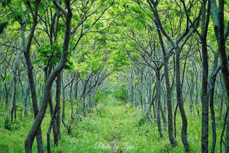穿過這片翠綠又佈滿枝葉的隧道,龍貓就在盡頭等著嗎?IG:luke_0813