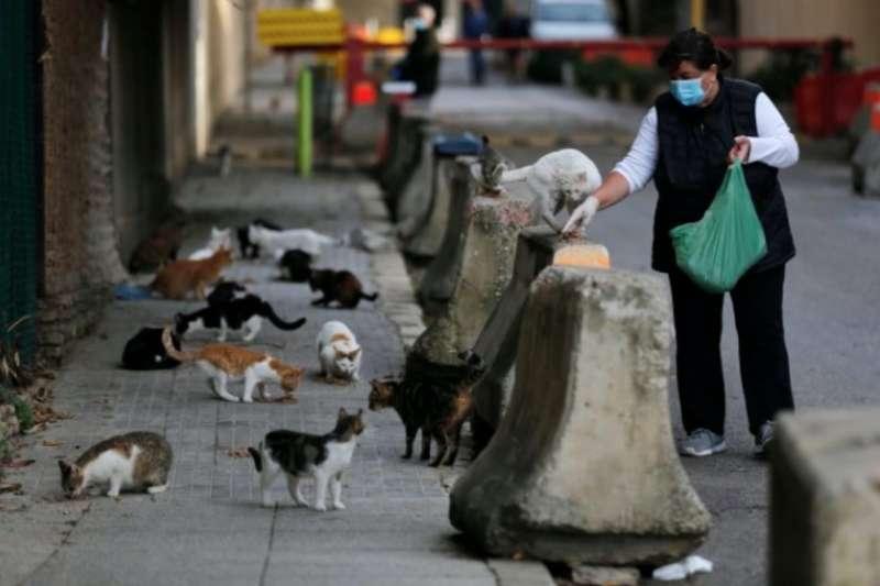 黎巴嫩貝魯特的街貓因為封城沒有東西吃,一位好心阿姨上街餵食,所有貓咪都聞香出動。(美聯社)