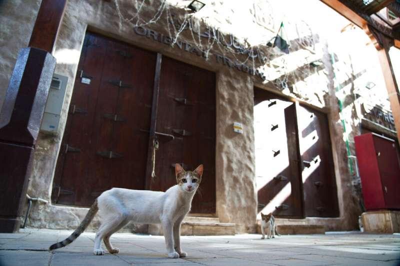 杜拜商店街因為封城停止營業,街上的貓咪到處晃蕩也找不到東西吃。(美聯社)