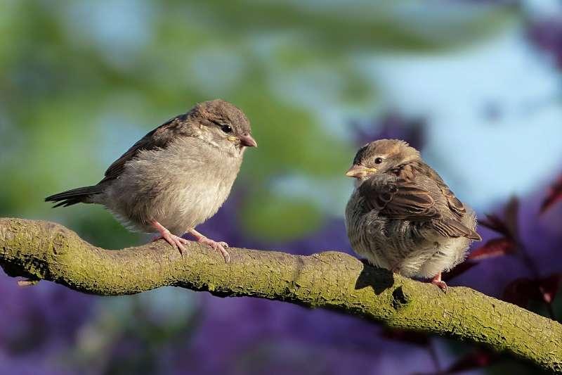 鳥類是怎麼躲過大滅絕的?(圖/pixabay)