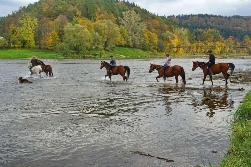 騎馬、渡河、牛仔。(圖/pixabay)