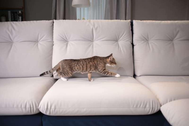 沙發挑選三重點讓貓不再搞破壞 (圖/赫里亞手工訂製沙發提供)