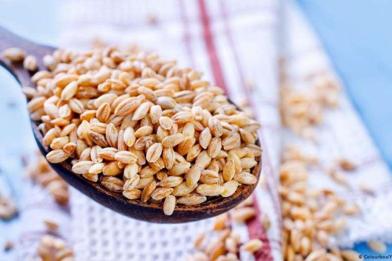 中國將對澳洲大麥征收80.5%關稅。(德國之聲)