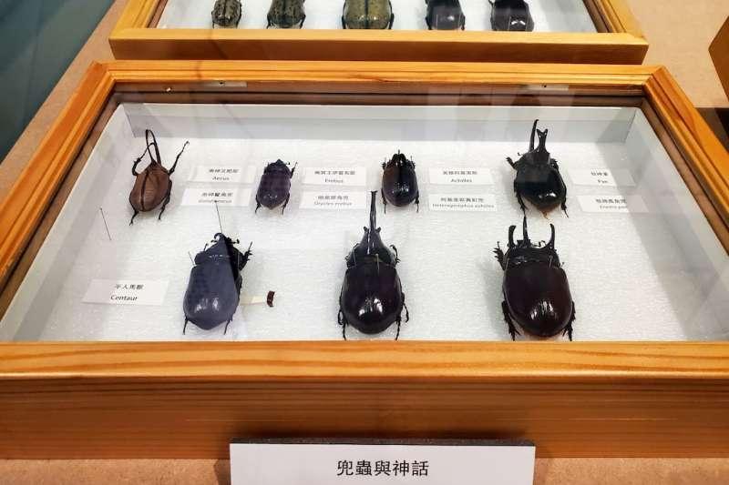 國立自然科學博物館推出即日起至110年3月止在第四特展室展出「繽紛的生命-生物多樣性」特展,首度公開館藏的部分世界兜蟲蒐藏。(圖/國立自然科學博物館提供)