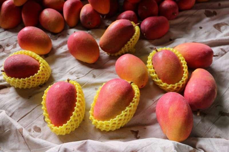 來自台灣的「蜜雪」芒果身價不斐。(圖片來源/挽菓子 Regetseed )