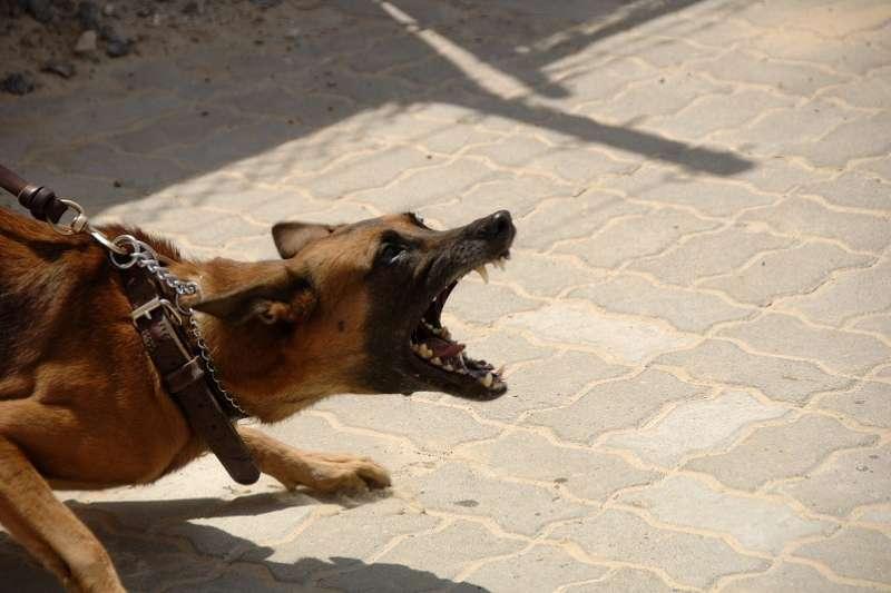 時隔14年,日本驚傳有狂犬病患者在境內發病。(圖/pixabay)