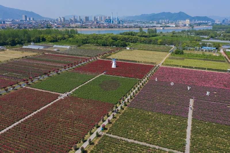 空中俯瞰杭州富陽區靈橋鎮外沙玫瑰園。(新華社)