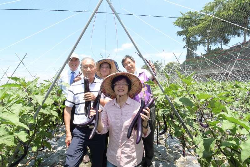 彰化縣長王惠美參訪行銷麻糬茄。(圖/彰化縣政府提供)