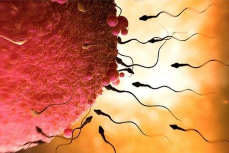 未受精卵會利用化學物質來吸引精子。(BBC中文網/SPL)