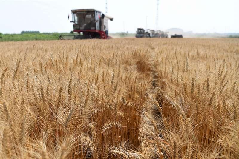 黃豆、小麥、玉米期貨價格在疫情期間難逃兇猛跌勢,如今展開絕地大反攻。(新華社)