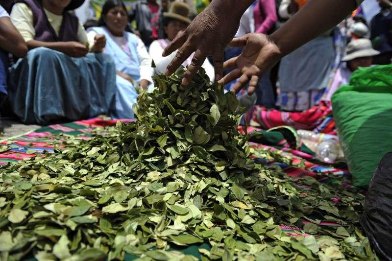 玻利維亞盛產古柯葉,土著傳統用來咀嚼或泡茶,亦為製造可卡因的原材料。(圖片來源:JORGE BERNAL/AFP via Getty Images/*CUP提供)