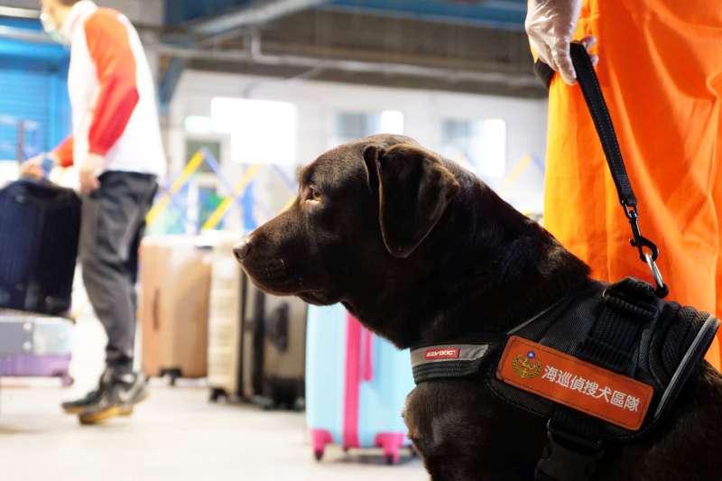 軍犬編制重回海巡行列後,「海巡偵搜犬區隊」犬隻即將實際投入勤務。(海巡署提供)