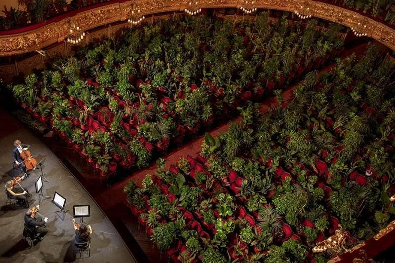 UceLi弦樂四重奏團面對席間2292盆、安坐在每個位子上的植物,演奏了普契尼的《菊花》。(圖/Emilio Morenatti/AP)
