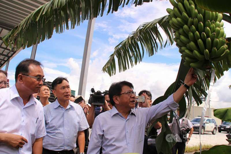 屏東是全台香蕉最大產區,近20年來香蕉外銷日本數量與金額,在其他國家競爭下外銷量逐年下降,如今誓言「重返日本市場」。(圖片來源/屏東縣政府提供)
