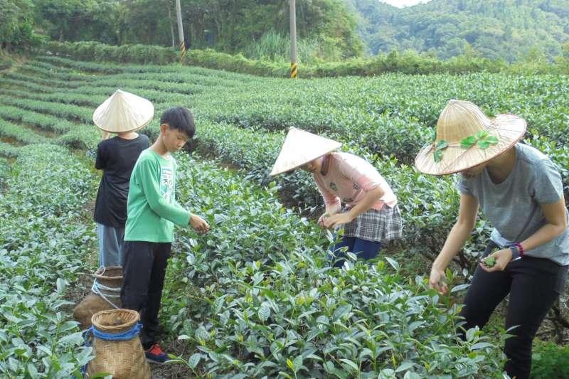 父母可趁暑假帶小孩到石碇區進行生態美食小旅行,感受製茶體驗文化。(圖/新北市石碇區公所提供)