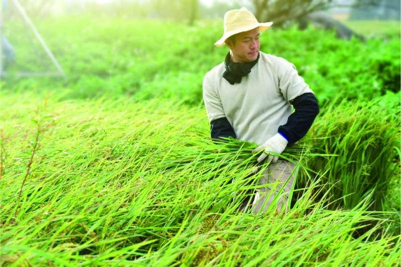作者指出,智慧農業正成為全球農業發展的重大趨勢,台灣面對外界智慧農業快速進步,政府不能單靠補貼。 (示意圖/富邦金控提供)
