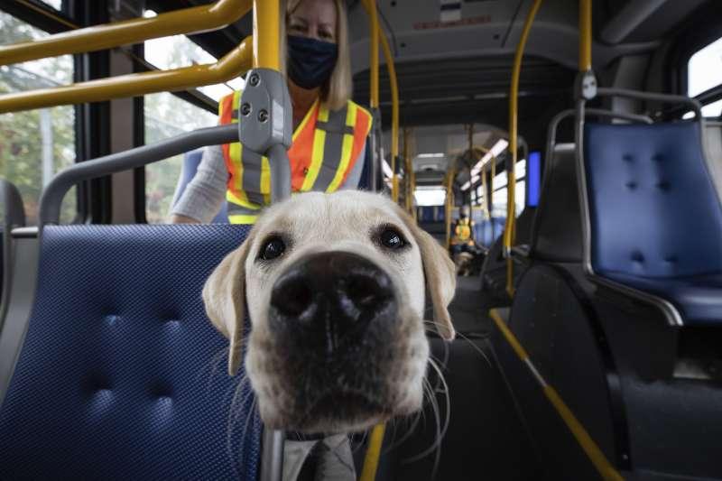德國研究發現,軍用嗅探犬可以分辨人類是否感染武漢肺炎(AP)