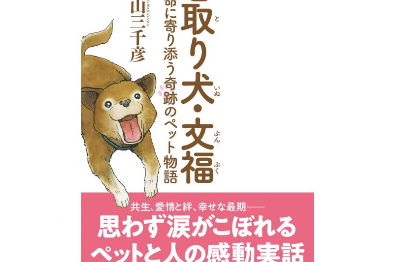 日本照護犬「文福」據說能以氣味變化判斷人是否即將逝世。(翻攝Amazon)