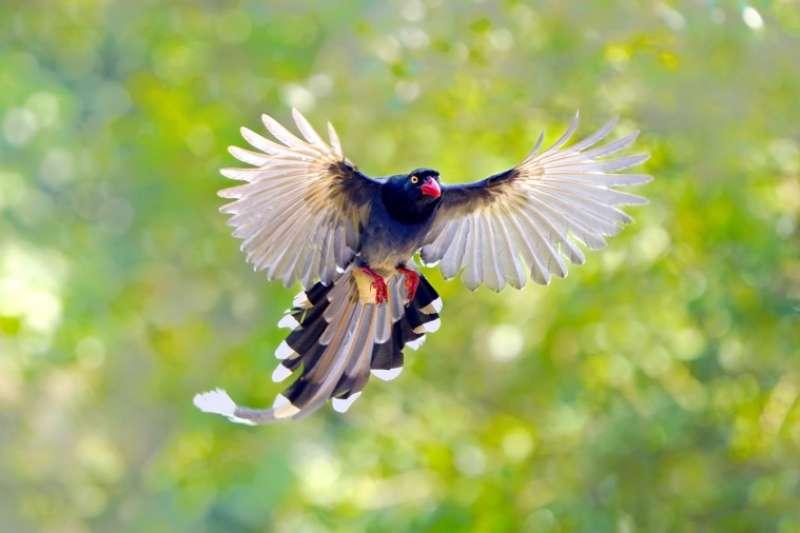 區域內能隨時補捉到白頭翁、紅嘴黑鵯等鳥類的身影。(圖/富比士地產王提供)