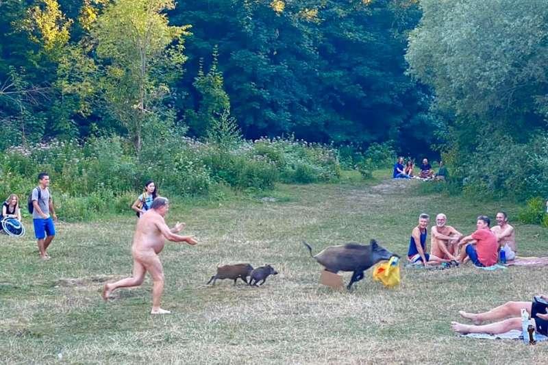 德國人到底有多愛天體浴?網路瘋傳「裸男追野豬照」,告訴你德國人其實沒有想像中保守(圖/取自Adele Landauer@Facebook)