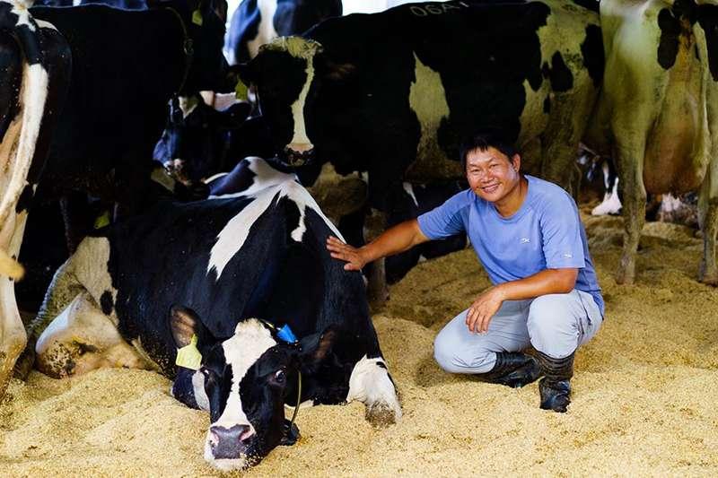 乳牛群對廖皎邦而言,除了是經濟來源,更是心愛的寶貝。(圖片來源:張家琪 食力提供)(圖/食力foodNEXT提供)