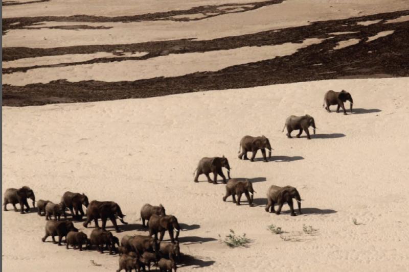 唐奬研補費為期五年(2015–2020)的補助計畫重要成果之一,就是原本因害怕遭受盜獵而改在夜間活動且會避開人類的象群,已能與人類和平共處。(唐獎教育基金會提供)